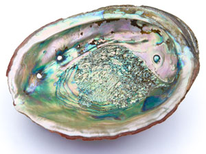 mother-of-pearl_shutterstock_105186932_300